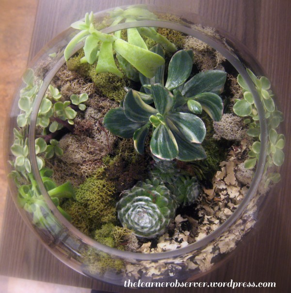 how to create your own terranium